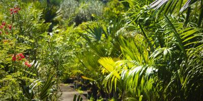 Les palmiers à la vente