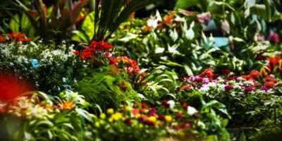 Une large sélection de plantes